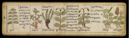 Ancient Tibetan medical text of medicinal herbs.